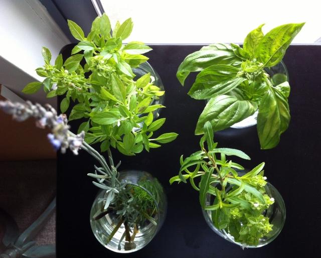 herbgarden2
