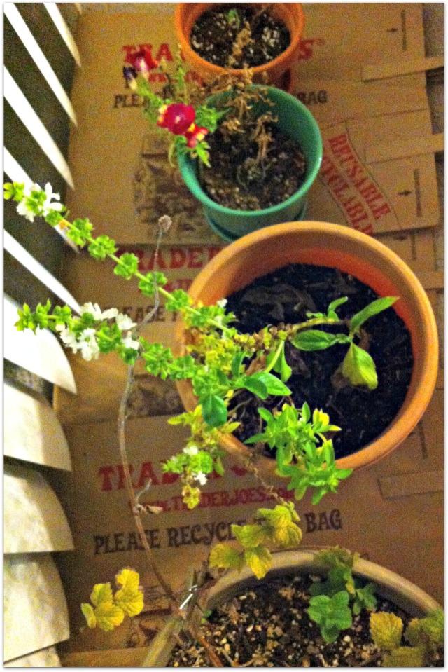 plantshibernating-002